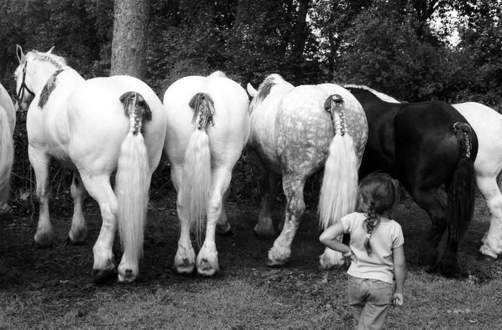 Percheron dray horses with a girl from the Perche region of France (i.e. a Percheronne)