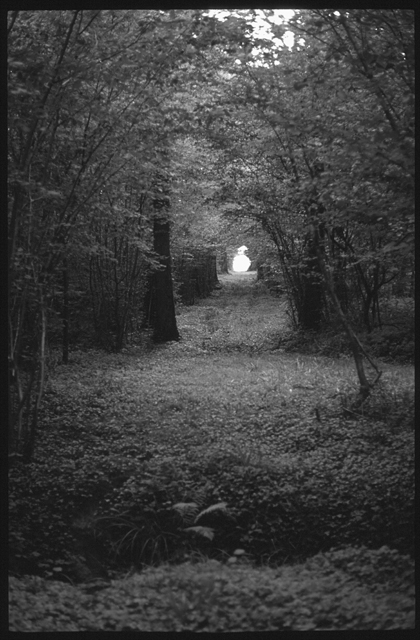 Pinhole photograph of coppice wood with standard trees at Clinchamps in the Perche