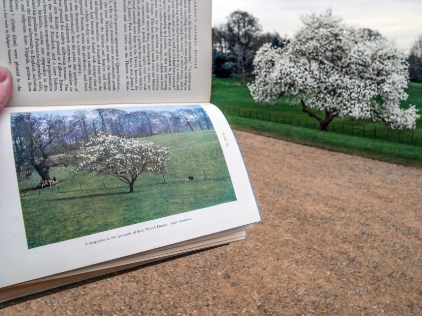 kenwood and fitter magnolias_blogpost (1 of 1)