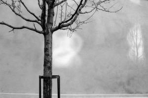 Coles_tree_9801-7A-Edit