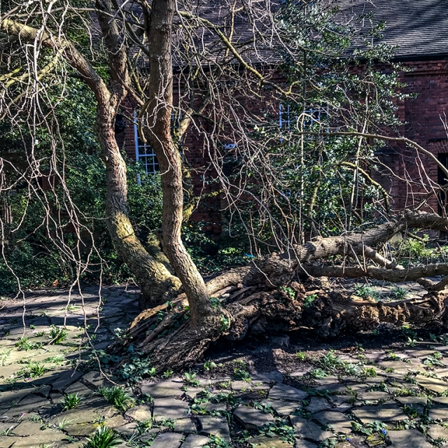 Canonbury_mulberry_2018-02-25_iphone